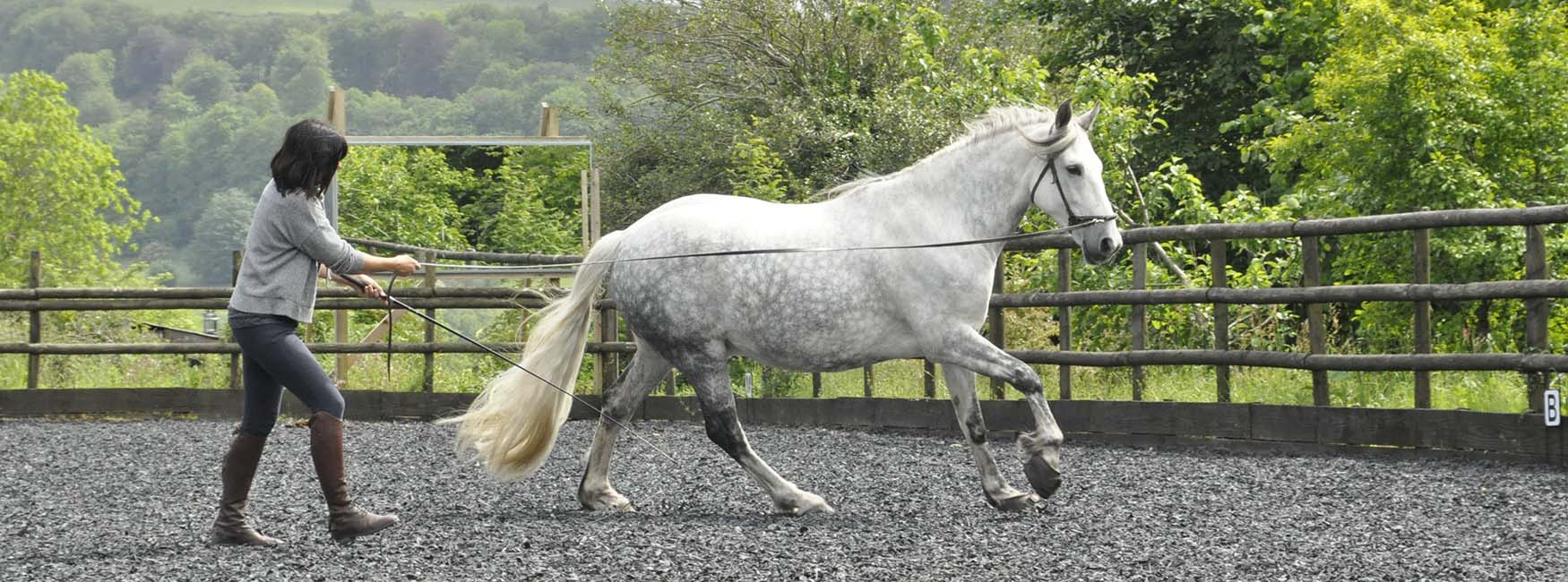 Soft and Sound Horse Training Devon